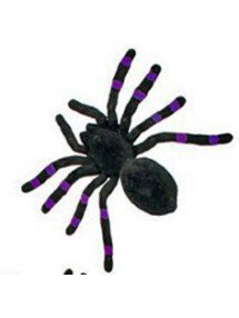 Бархатный тарантул черно-фиолетовый