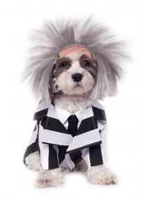 Костюм Битлджуса для собак